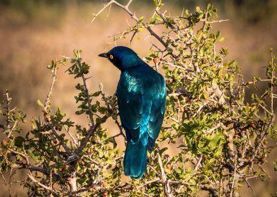 BlueBird South Africa